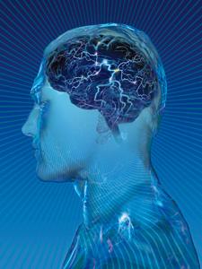 浮かび上がる脳の陰の活動
